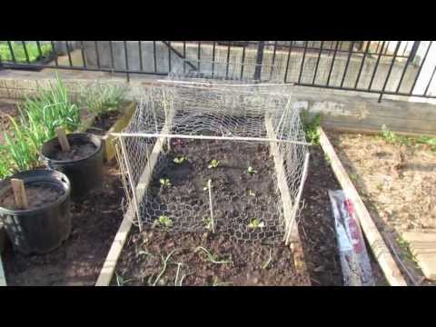 Garden Update for Early April: My Tomato & Vegetable Transplants - The Rusted Garden 2013