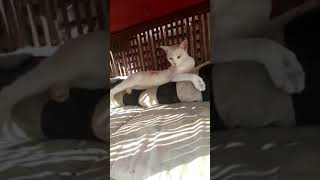 TOP10 Funny CATS! SWEET KITTYS Playing TIME ,Everyday Together, Cute Kittens Compilation,DEC,16,2018