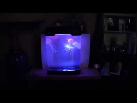 Jellyfish, Mood Lamp, 10 inch, ubur-ubur, akuarium, indonesia