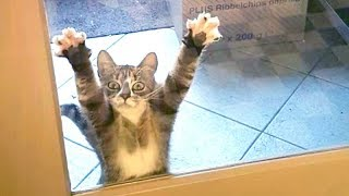 LAUGH HARD at FUNNY ANIMAL VIDEOS - Best FUNNY VIDEOS 2019