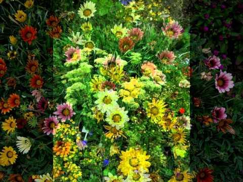 Giardini fioriti in armonia con spirito bellezza e Musica