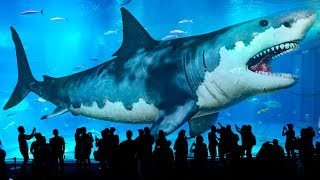 10 Biggest Sharks Ever Existed on Earth (Meg Isn