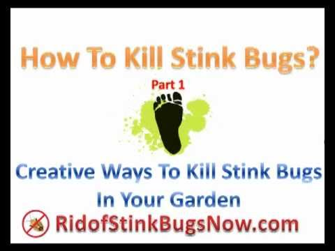 how to kill stink bugs part 1 rid of stink bugs in your garden naturally youtube. Black Bedroom Furniture Sets. Home Design Ideas