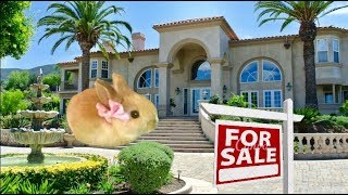TOOTSIE HAS A NEW HOME!!! SO CUTE | Vlog