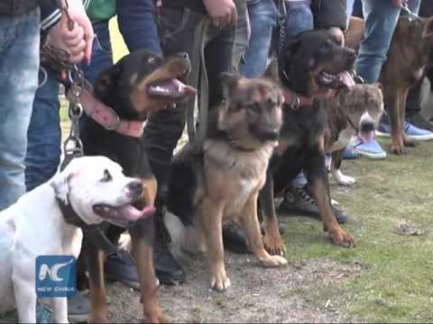 Dog show in Gaza