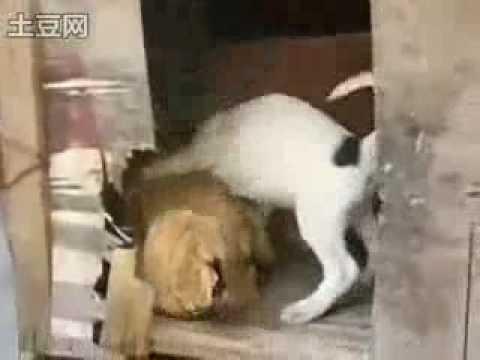 O Cachorrinho Pegão