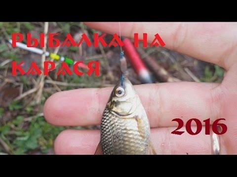 рыбалка на карася 2016 год