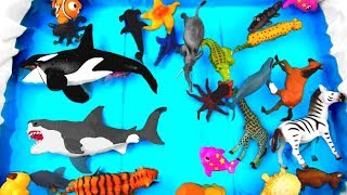Learn Colors with Wild Zoo Animals For Kids Learn Animal Names