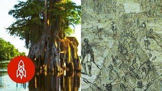 How a Swamp Helped Runaway Slaves Find Freedom