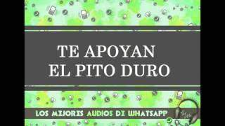 TE APOYAN EL PITO DURO - Los Mejores Audios De WhatsApp