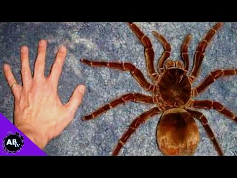 GIANT Animals That Actually Exist! 5 Weird Animal Facts!