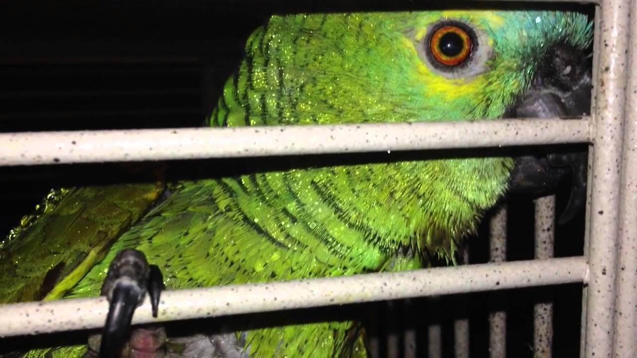 Show Pics of Your Parrot Bites!  Page 2  Parrot Forum