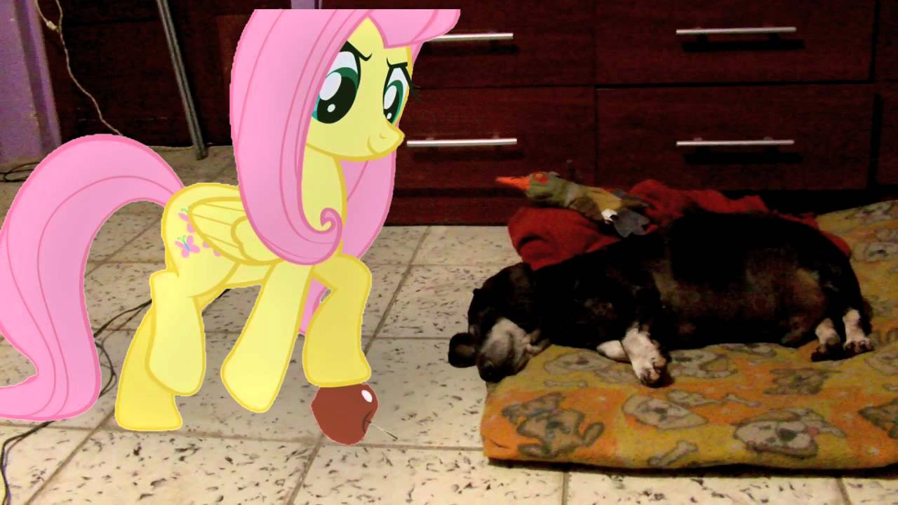 Fluttershy Gives My Dog An Apple Mlp In Real Life Youtube