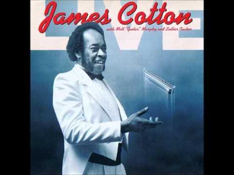 James Cotton - midnight creeper - live