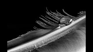 ABSTRACT MACRO PHOTOGRAPHY TIPS - Creating Stunning Feather Photos Plus Focus Stacking