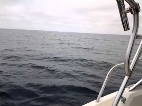600 lb Mako Shark Fishing @ 267