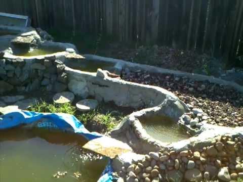 Aquaponic update ponds flowing plants growing for Aquaponics fish pond