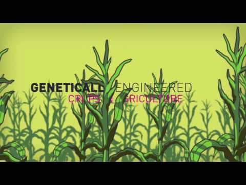 Genetic engineering: The world s greatest scam?