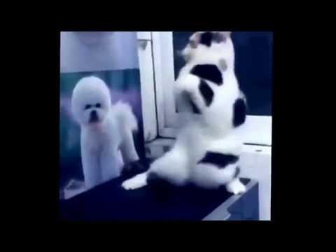 Funny Cat Dances By: Mia Kliver
