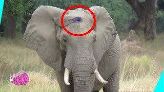 حيوانات تطلب مساعدة من الانسان ، فما هو رد فعل الانسان..؟؟!