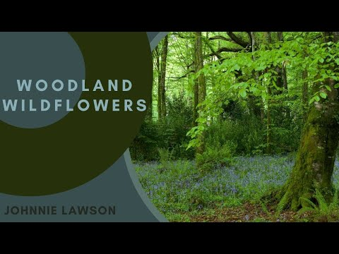 8 Hours Relaxing Nature Sounds for Studying-Birdsong Relaxation-Bird Singing
