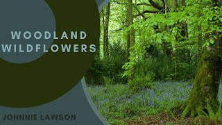 Download Lagu 8 Hours Relaxing Nature Sounds for Studying-Birdsong Relaxation-Bird Singing Gratis STAFABAND