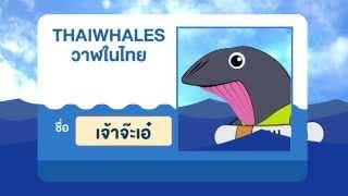 รู้จักวาฬในอ่าวไทย