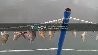 Снова варим уху и завялили рыбу в Астрахани.