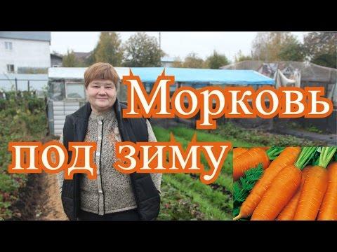 Посадка моркови под зиму. Подготовка грядок. (4.10.16 г. )