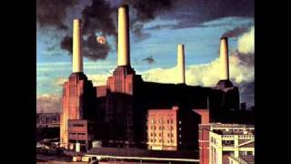 Video Dogs Pink Floyd