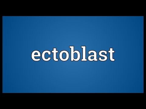 Header of ectoblast