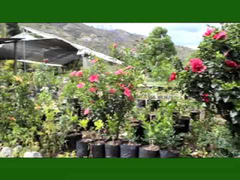 Las cucardas youtube - Como aprender jardineria ...