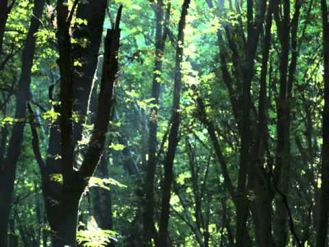 Relaxing Flute Music For Sleep, Meditation, Yoga, Study And Work (forest Sunlight) video