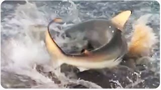 Shark Infested Waters | Feeding Frenzy