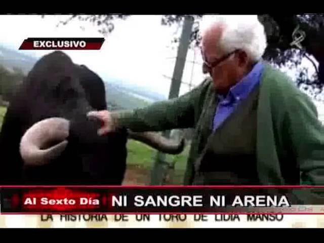 Ni sangre ni arena: el lado más sorprendente y enternecedor de los toros