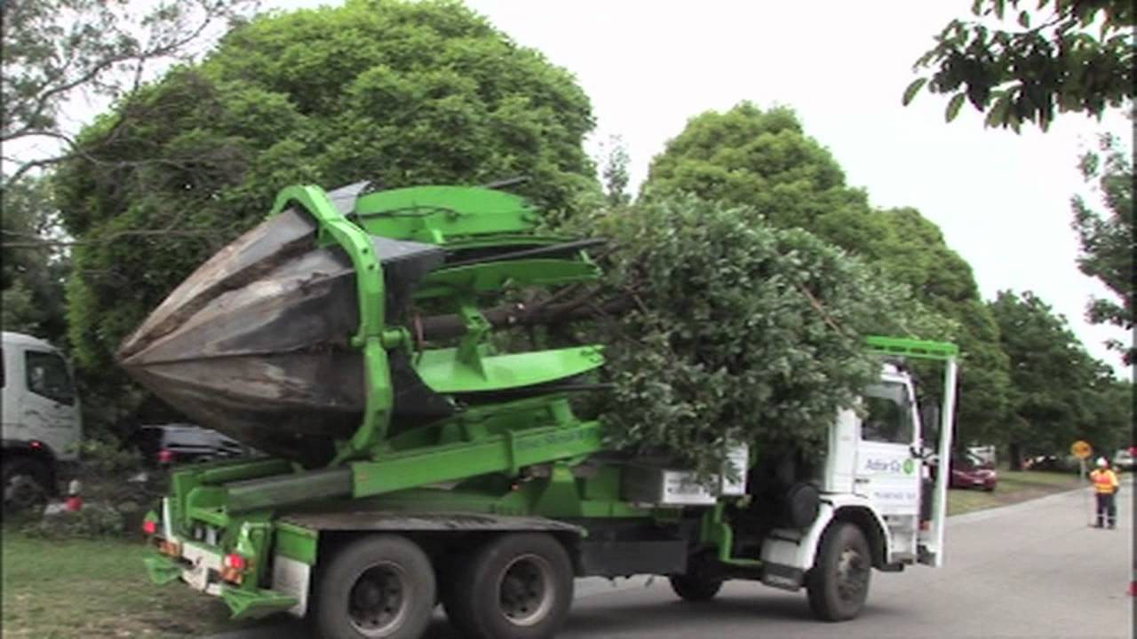 tree moving machine