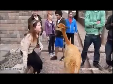 Animales que asustan - videos recopilatorios de humor