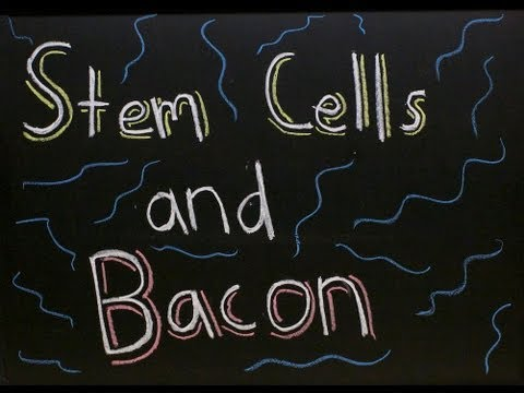 Stem Cells and a Brief Mention of Bacon