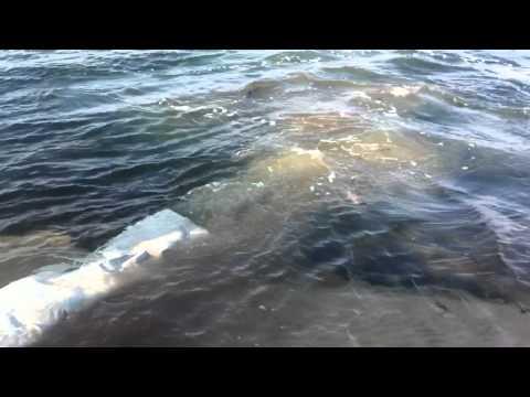 клев рыбы в россонах
