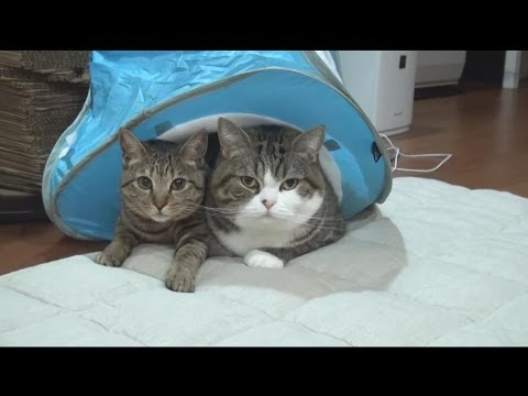 水色テントとねこ。