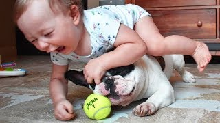 Dog loves Baby | Try Not To Laugh With Funniest Moment Baby Playing With Dog