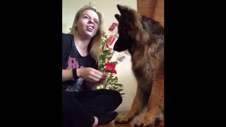 German Shepherd Dogs: Funny Moments Compilation 2019