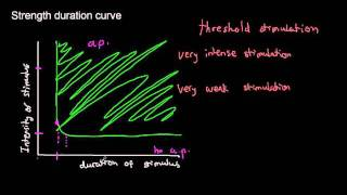 lecture 19 part 4 (Action potential, Stimulation threshold, characteristics, rheobase, chronaxie)