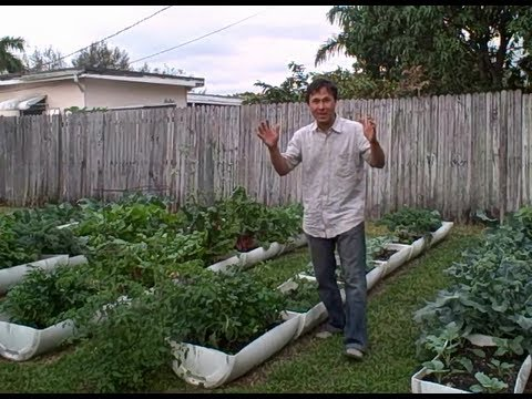 Backyard Edible Garden