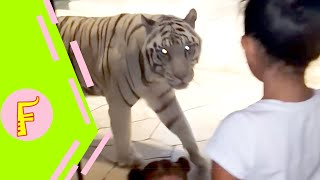 Funny Kids and Animals at the Zoo - Funny Kids Fails Vines