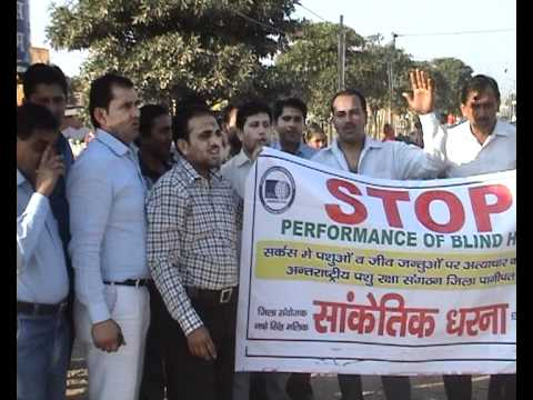 OIPA in India protesting against Jumbo circus