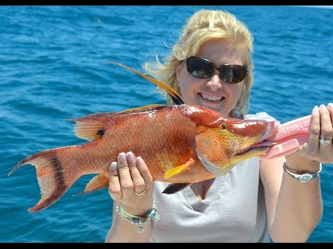 Catching Hogfish on hook and line in Tampa Bay / Saint Pete Beach