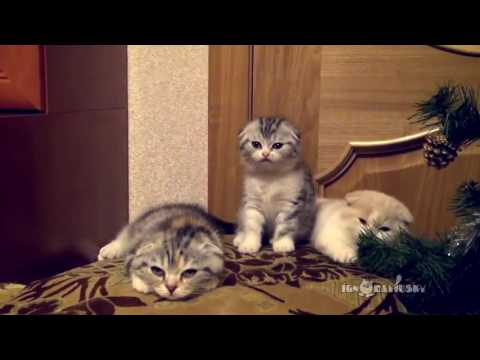 Cats Yawn, Pass It On!