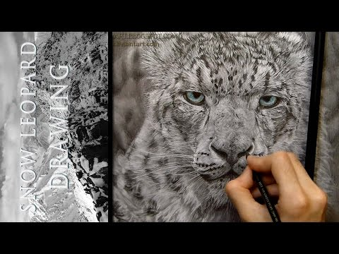 Snow Leopard - Drawing