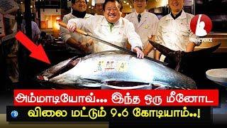 அம்மாடியோவ்... இந்த ஒரு மீனோட விலை மட்டும் 9.6 கோடியாம்... - Tamil Voice